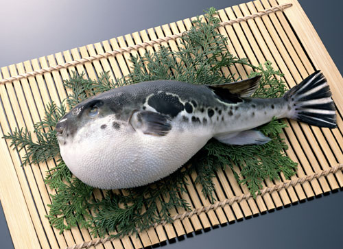 Image result for Fugu' fish