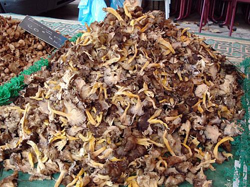 mushroom-mound.jpg