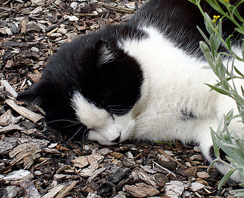 IMG: sleeping cat.