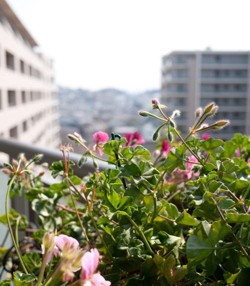 yokohamaflowers-1.jpg