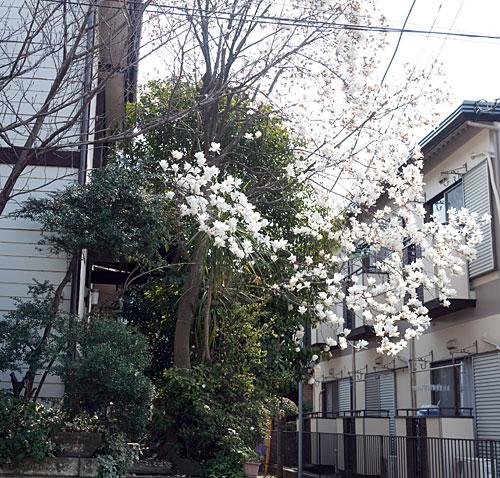yokohamaflowers-3.jpg