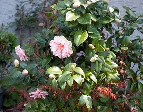 yokohamaflowers-4.jpg